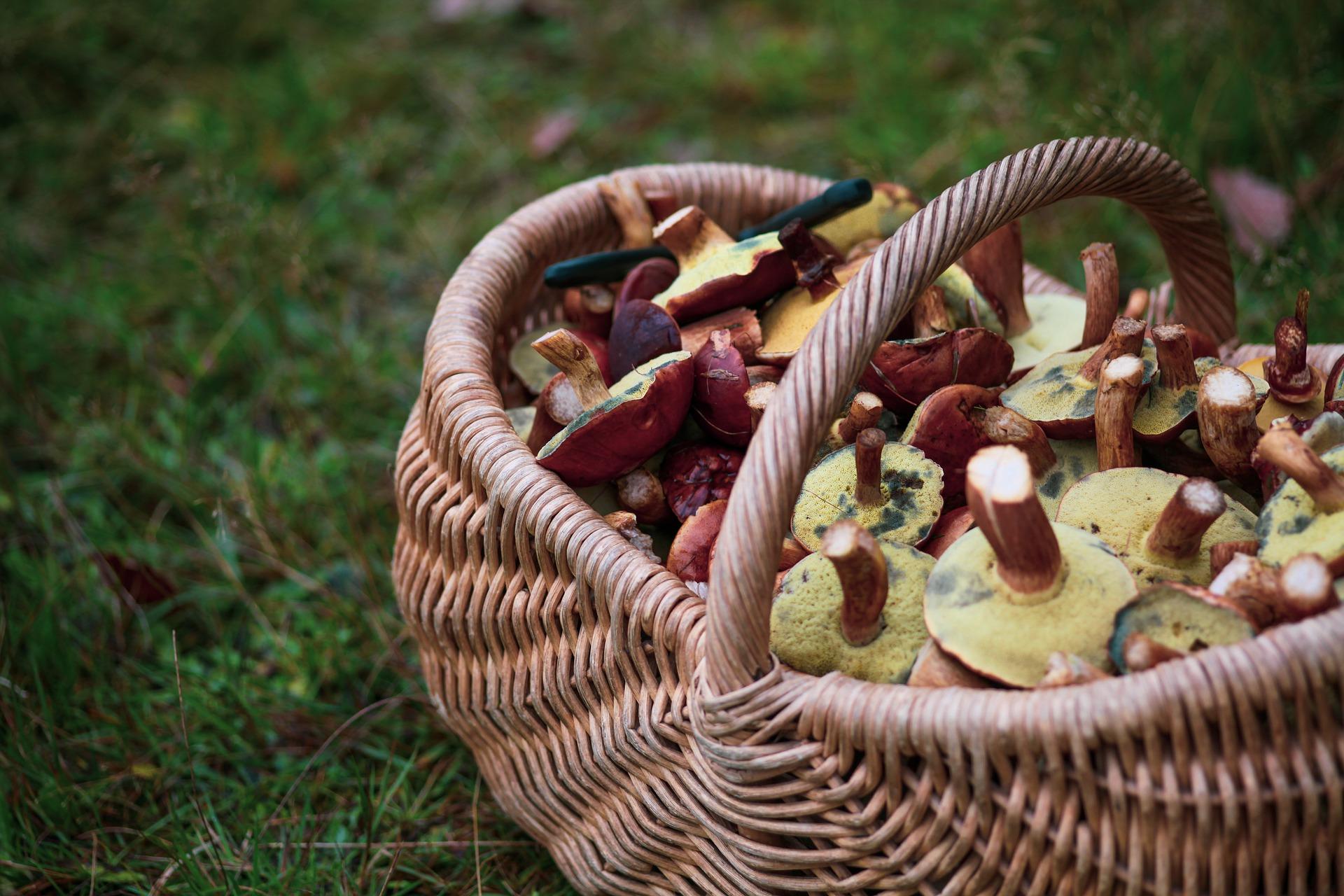 3 Orte um Pilze in Mitteldeutschland zu sammeln